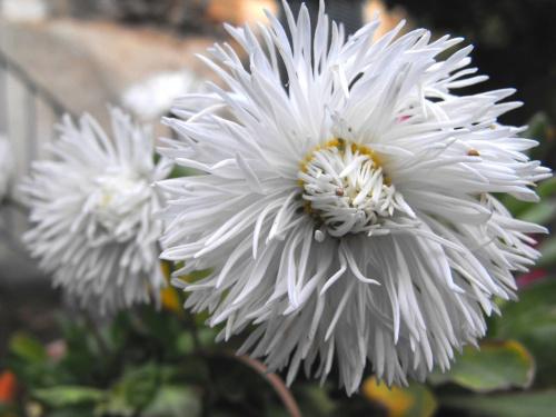 2009_04_08-Flores002