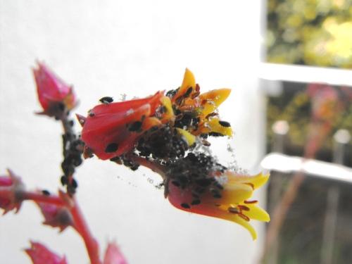 Jardim_12_05_2009 (153)